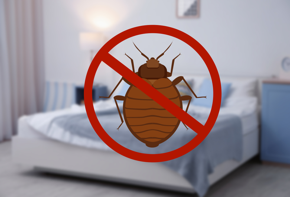 No Bed Bug Infestation Can Withstand Our Powerful Heat Treatment